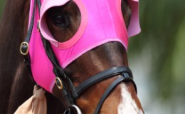Horse-with-Blinders-on